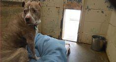 Lexus viveu com a família por dez anos, mas eles acharam que o cão idoso não combinava mais com a casa após a reforma e decidiram abandoná-lo.