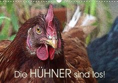Die Hühner sind los! - CALVENDO Kalender von Lucy M. Laube