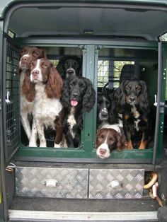 Food for thought! One day I too will have many spaniels.