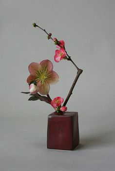 Miniature ikebana-helleborus and quince by Keith Stanley
