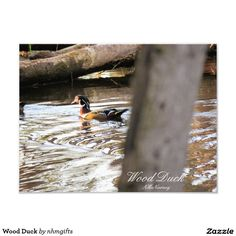 Wood Duck Photo Print