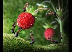 Andrey Pavlov, Russian Photographer, Takes Fairytale-Like Pictures Ants