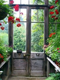 Sweet garden shed with lots of windows,  old french doors, geraniums, lots of green foliage surrounding shed  via:Enchanted Corner