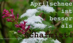 Aprilschnee ist besser als Schafmist Bauernregel für den April