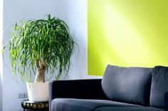 Refreshment, rejuvenation and rebirth is this year's interior design trend. Says who? Pantone! The official color of the year, Greenery, has already been spotted in fashion runways or interior designs ⤵️