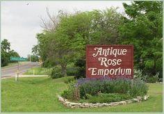 Antique Rose Emporium in Independence, Texas