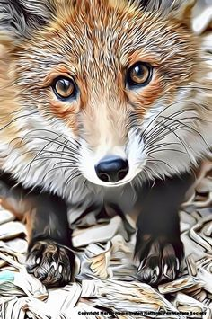 Angel the red fox from Surrey