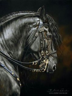 Freisian stallion drawn in pastel by B. Arends-Weinreich, Equine Fine Arts.