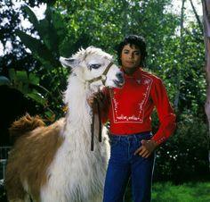 Michael Jackson's Pet Llama