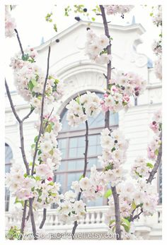 April in Paris - Cherry Blossoms in White