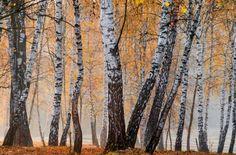 Осенний лес;)) Сказочные фотографии!