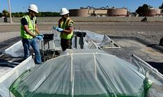 The key to water security could be lurking in a New Mexico sewage farm. In Las Cruces, New Mexico, a pilot project is using heat-loving algae to clean wastewater and generate energy
