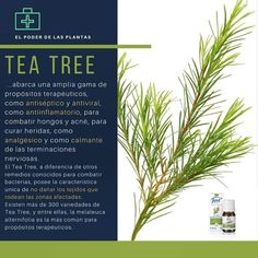 Tea Tree, Natural, Lettering, Chill Pill, Heal Bruises, Love Flowers, Fungi, Aromatherapy, Remedies
