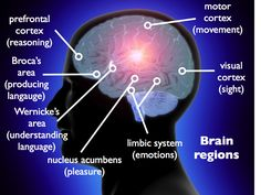 A Very Short Course on Brain Structure