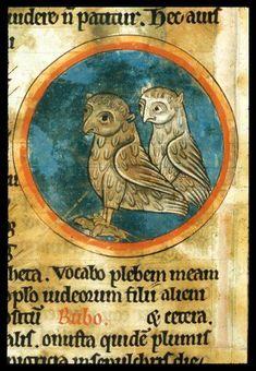 Owls - Harley 4751 f. 46v