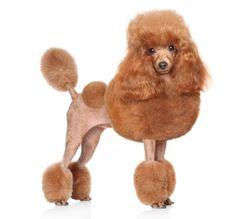 Cortar el pelo a mi perro - Paso a paso