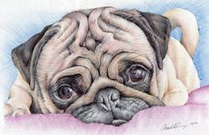 ACEO MAGNET PUG Magnet print of my by AngelsFacesPortraits on Etsy, $10.00
