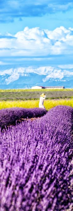 Stunning Lavender Fields in Provence, France | 13 Amazing Photos of Lavender…
