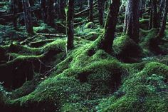 まるでジブリの世界!コケが埋めつくす美しい森~長野「苔の森」