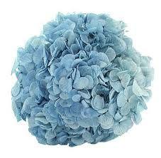 Bulk Blue Hydrangea - Wholesale Flowers | Boxes of Flowers | Wholesale Bulk Wedding Flowers at BunchesDirect