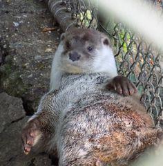 Mischievous otter :)