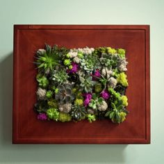 Succulent Wall Garden in a Picture Frame