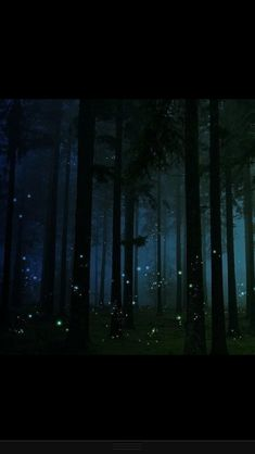 Fireflies in Tobago. The most romantic love story that I know is of a firefly. They live their whole life searching for one mate and one love.