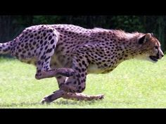 SPEED FREAKS! 10 of THE FASTEST ANIMALS in the world! (World's fastest land animal, bird and fish!) - YouTube