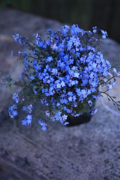 forget-me-not ~ I am missing you