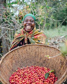 #burundicoffee #burundi #longmilescoffeeproject #changeinthechain Harvest Season, East Africa, Best Memories, Good Times, In This Moment, Seasons, Statue, Coffee, World