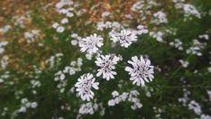 FLORES :3 Instagram, Plants, Colombia, Fotografia, Pictures, Plant, Planting, Planets