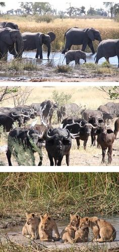Botswana Safaris to Selinda Camp in the Selinda Spillway