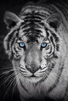 allcreations:  Blue Eyes by Vitoria Dalla Valle