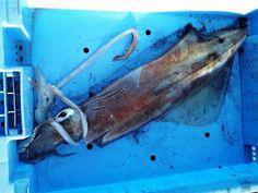 Nueva mirada al mar: Calamar