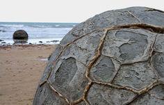 Septárie Moeraki Boulders na Jižním ostrově Nového Zélandu Tyto duté a téměř dokonale oblé balvany připomínající vyduté želví krunýře najdeme poblíž novozélandské rybářské vesnice Moeraki. Pocházejí z doby paleocénu a jde o tzv. septárie, často více než dvoumetrové konkrece lišící se složením od okolní horniny. Vznikly akumulací (akrecí) nerostné substance kolem růstového centra (patrně kolem fosilií).