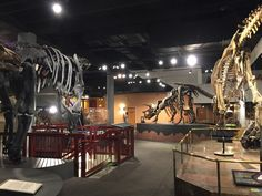 Arizona Museum of Natural History: Reviews from families visiting Arizona Museum of Natural History. From the moment we walked in my boys were in awe at the huge dino skeletons. Every room is full of hands on activities as well as no-touch displays. My 3 1/2 year old loved that there were giant floor puzzles. There were also more involved giant 3D puzzles that bigger kids would like. Down in the basement is a whole room where kids can just play. They have learning toys, more puzzles, din...