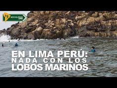 Swin with Sea Lion in Lima Peru (video with subs) / Nada con los lobos marinos en Lima Perú.  Callao, Islas Palomino #Lima #Peru #Travel #backpacking #mochileros #traveller #wanderlust #inspiration #sealions
