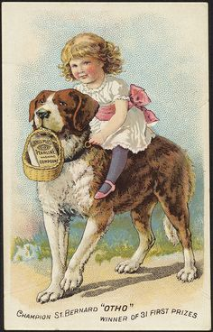 """Bernard """"Otho"""" winner of 31 first prizes - James Pyle's Pearline washing compound [front] Dolly Doll, Fine Art Prints, Canvas Prints, St Bernard Dogs, Dogs And Kids, Saints, Poster Prints, Creatures, Victorian"""