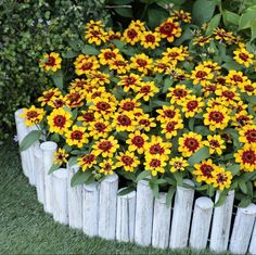 One of the great things about Zinnias is their diversity! They grow and perform well in containers and in the garden. AAS Gold Medal Winner Profusion Red Yellow Bicolor is just one of the many AAS Winning Zinnias you will want to grow this year! Which Zinnia is your favorite? Gold Medal Winners, Zinnias, Cut Flowers, Bloom, Yellow, Garden, Plants, Red, Garten