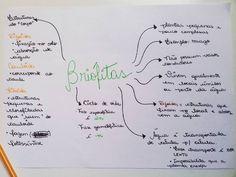 """48 curtidas, 2 comentários - Resumos, ETEC, ENEM e estudos (@passeisemcursinho) no Instagram: """"Botânica não é o assunto que mais cai nos vestibulares, mas é válido lembrar alguns conceitos! Vou…"""""""