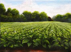 Tobacco field near the town of Creedmoor North Carolina. Original painting features rows of tobacco plants and detailed leaves, with a barn to the rear of the field. Little Country Girls, Farm Paintings, Southern Sayings, Autumn Scenery, Art Walk, Down On The Farm, Lots Of Money, Hand Painting Art, Farm Life
