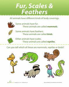 Worksheets: Animal Coverings