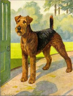 "1935 - ""THE AIREDALE"" from Hutchinson's Dog Encyclopaedia (England, circa 1935)"