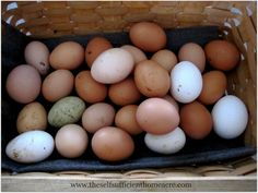 Do Chickens Lay Eggs in the Winter?