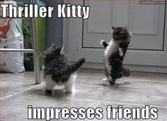 Kitttyyy triller!