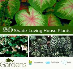 A list of house plants that will happily thrive in the shade. via @lajollamom