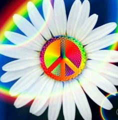 Daisies were my favorite flower! So I thought I'd send you one for happiness, peace, and love from your mom, Ashlie! Hippie Peace, Happy Hippie, Hippie Love, Hippie Art, Hippie Style, Hippie Things, Hippie Chick, Hippie Vibes, Peace On Earth