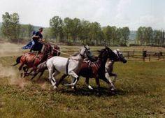 Wrangler, Hungary Great Plains, European Tour, Bucharest, Eastern Europe, Czech Republic, Hungary, Croatia, Austria, Equestrian