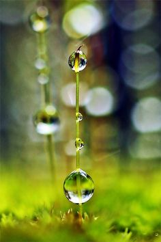 """""""The tiniest dewdrop hanging from a grass blade in the morning is big enough to reflect the sunshine and the blue of the sky."""""""