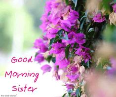 Good morning wishes for sister Images Photo Pics Wallpaper Pics HD Good Morning Sister Images, Good Morning Daughter, Good Night Sister, Free Good Morning Images, Good Morning Photos, Good Morning Gif, Good Morning Friends, Good Morning Greetings, Morning Pictures